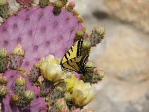 Cacti flower and butterfly
