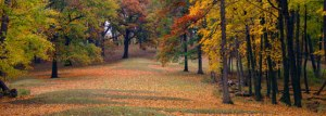Fall at Effigy Mounds