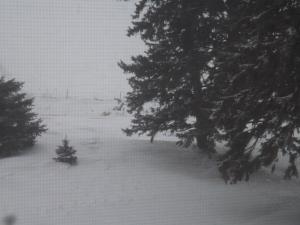 Winter 2 2015