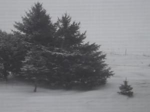 Winter 4 2015